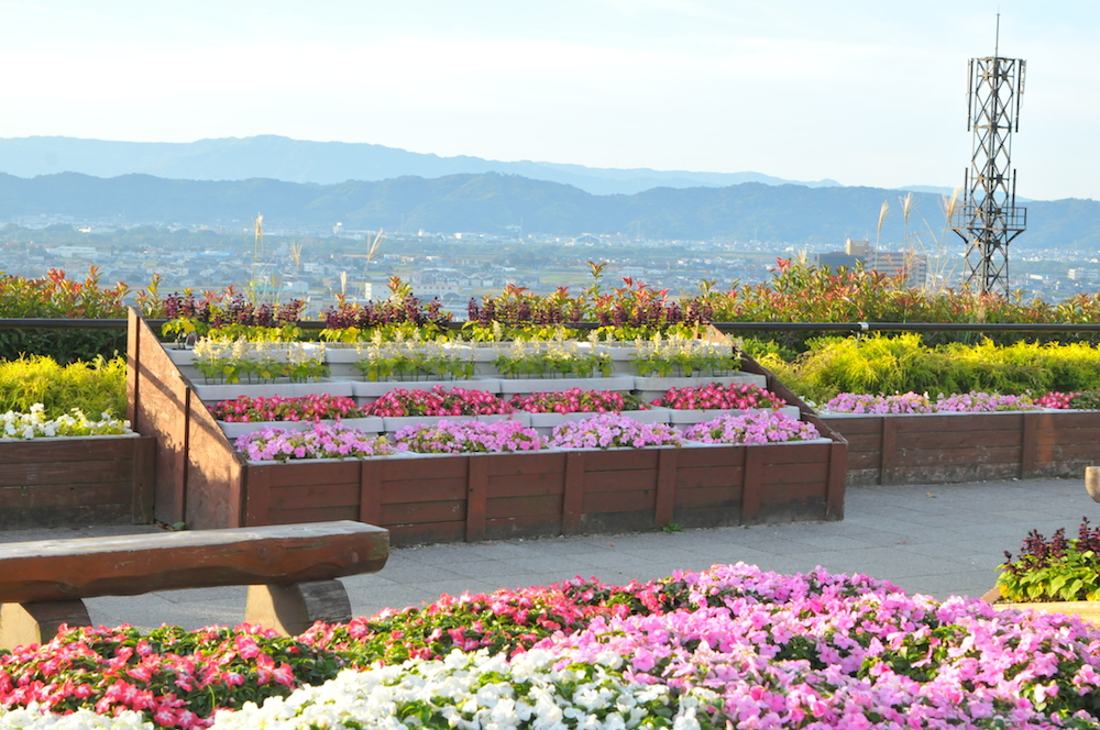 いつも綺麗な花壇