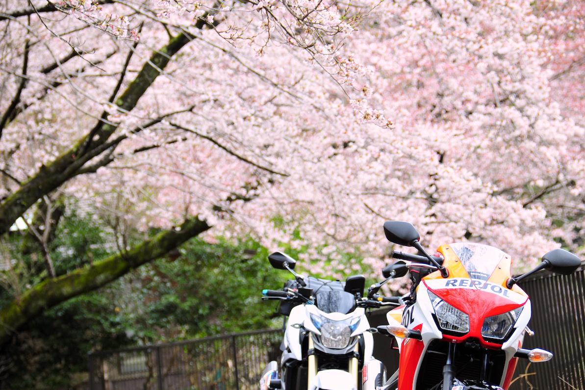 下北山の桜と龍神スカイライン