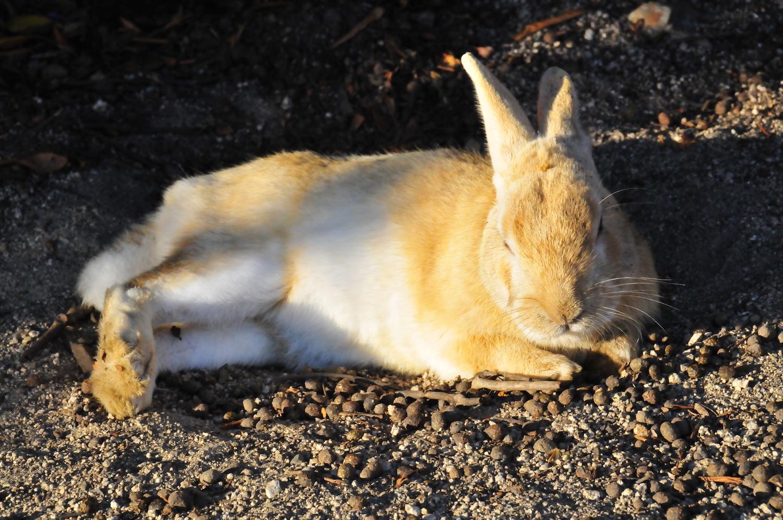 野生のウサギとは(哲学)