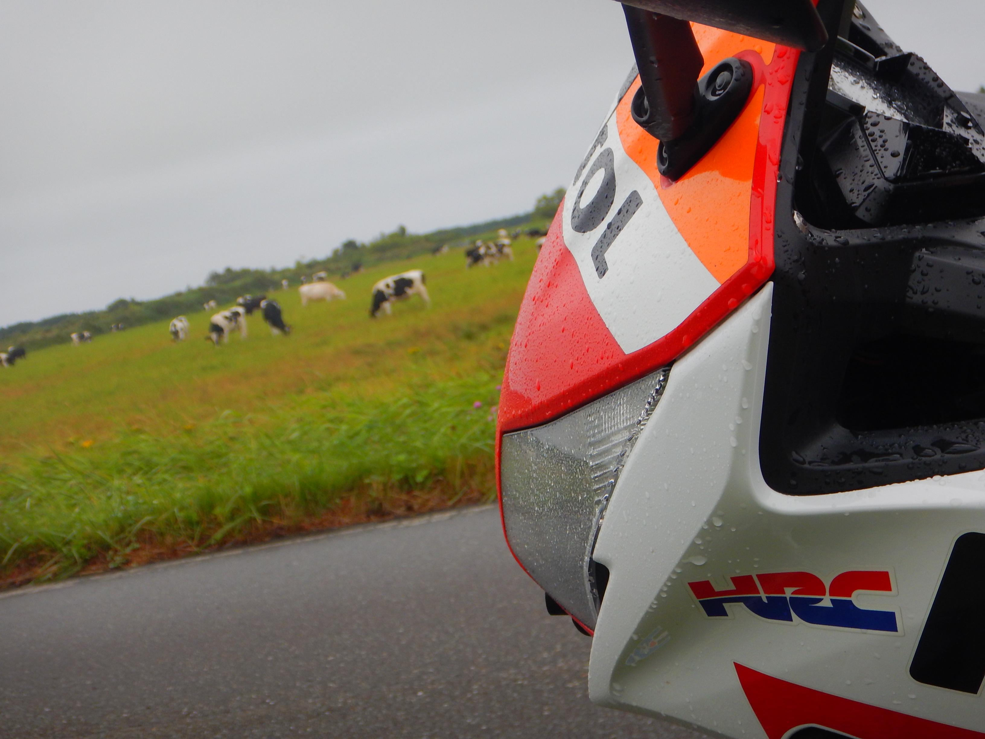 牛さん発見