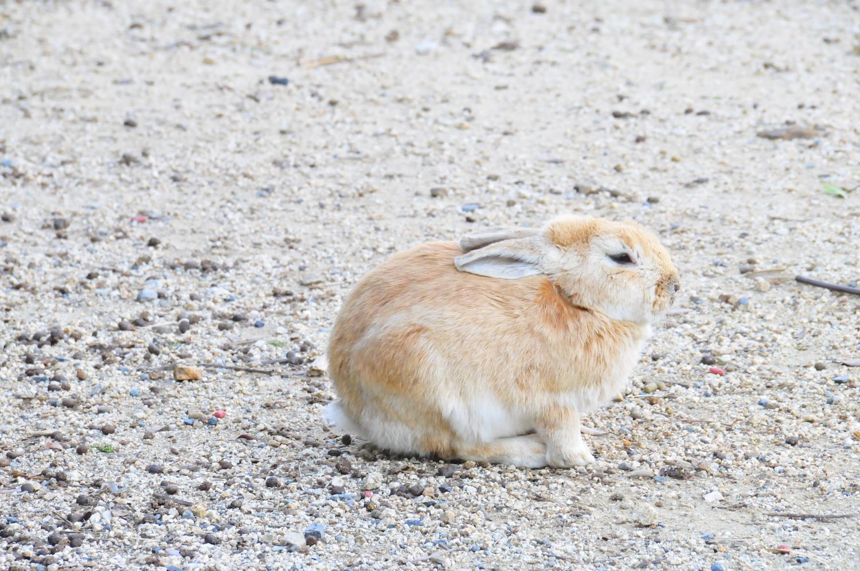 子ウサギも