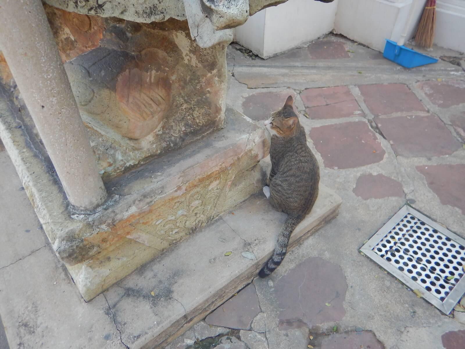 バンコクには野良猫と野良犬がたくさん